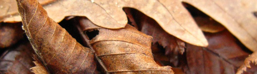 Ξερά, χειμωνιάτικα φύλλα βελανιδιάς και καστανιάς
