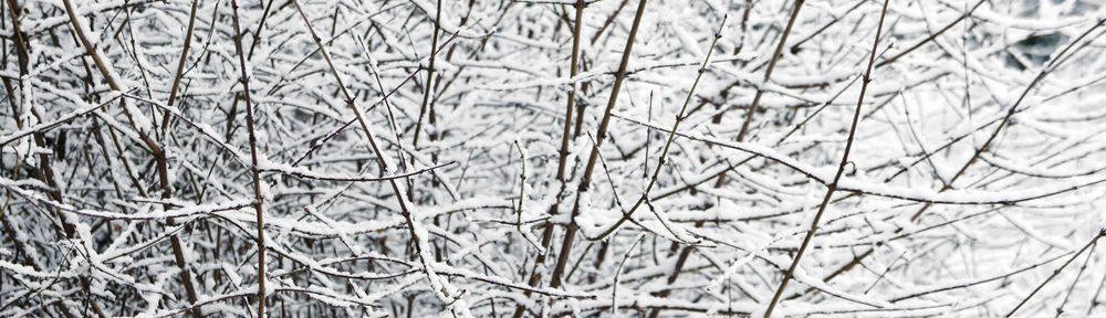 Κλαδιά φορτωμένα με χιόνι στο Δίλοφο Ηπείρου