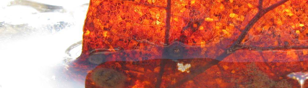 Φύλλο στο παγωμένο ρυάκι που περνάει από τον Άγιο Μηνά κοντά στο Δίλοφο στα Ζαγοροχώρια
