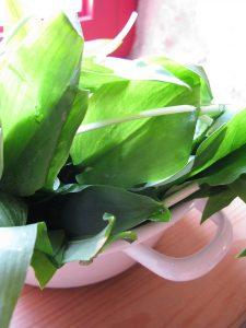 Φύλλα αγριόσκορδου (Allium ursinum) - Ζαγοροχώρια