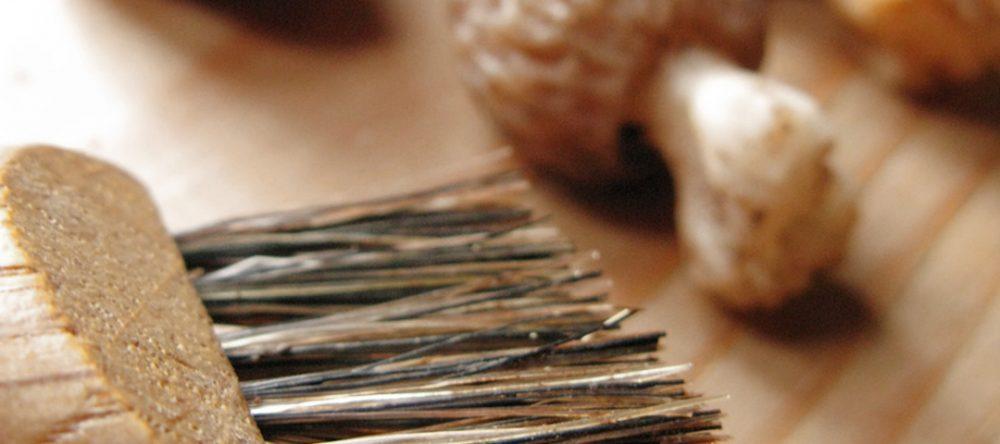 Εποχή συλλογής μανιταριών στα Ζαγοροχώρια