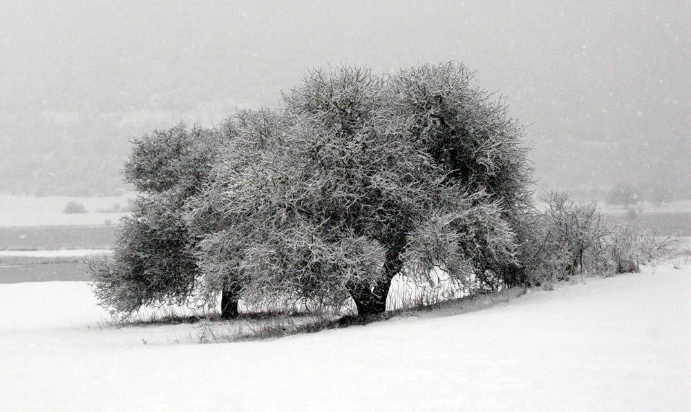 Επί τέλους και λίγο λευκό, αγνό χιονάκι στα Ζαγοροχώρια μετά από νεροποντές, πολικές παγωνιές και ακραίες καιρικές προβλέψεις