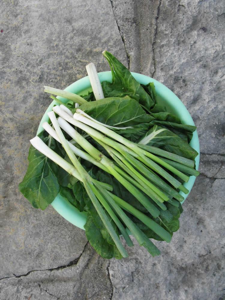 η πρασινάδα ... σπανάκι, λάπαθα, μαϊντανός, φρέσκο κρεμμύδι, σέσκουλα, ξερό κρεμμύδι
