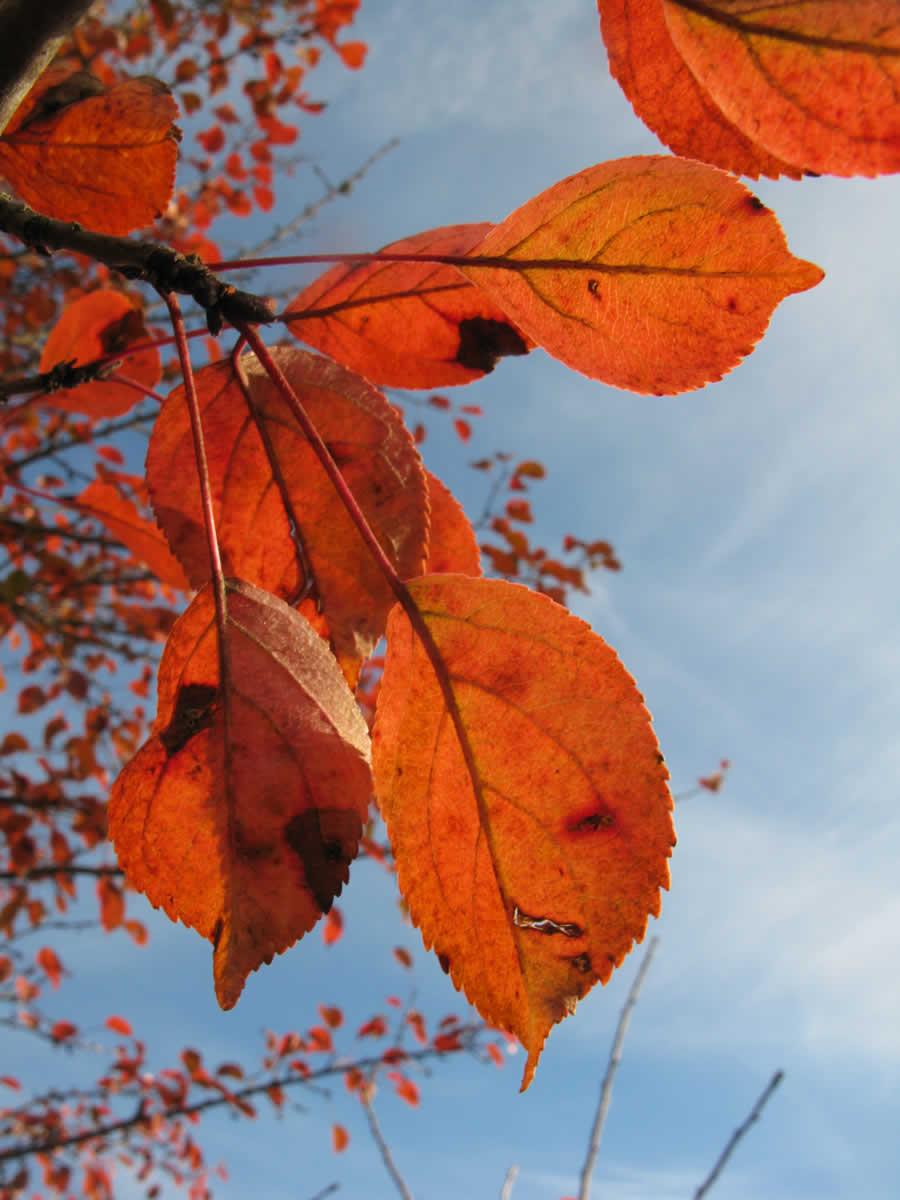 Τα χρώματα τού φθινοπώρου