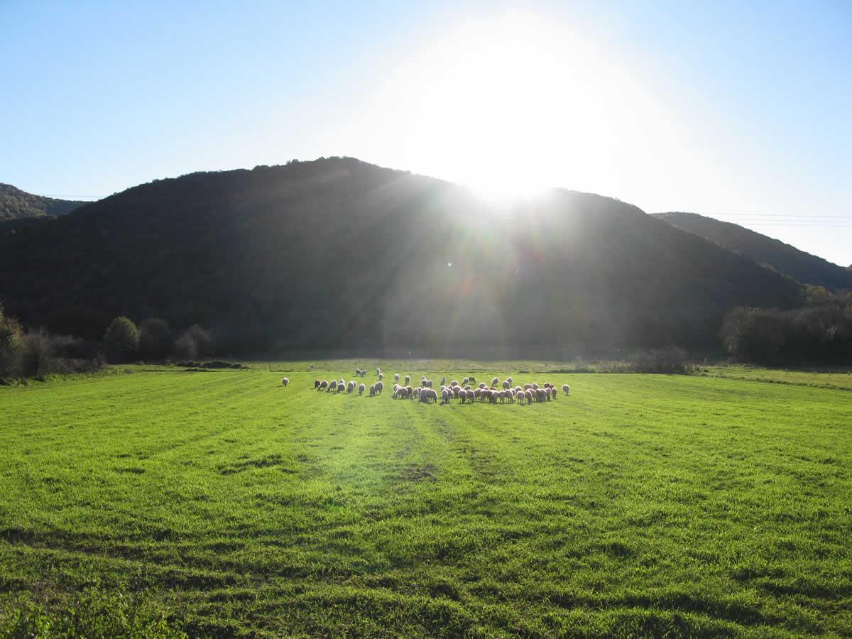 Δροσερή πρασινάδα τού Νοεμβρίου στα Ζαγοροχώρια